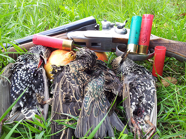 hunting, cartridges, huntes, shootinh, shotgun