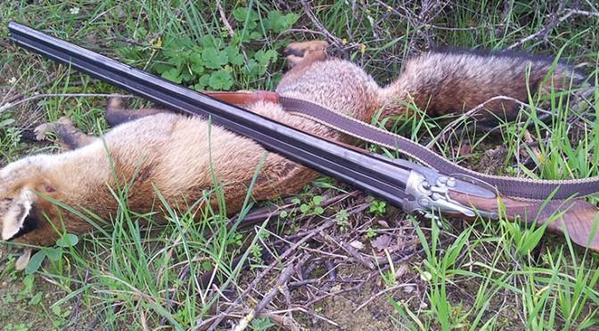 16 ga shotgun huntin shooting